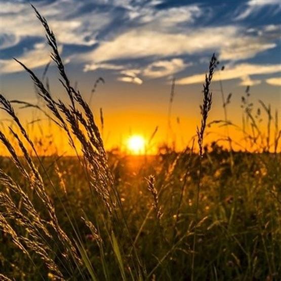 Principais Conceitos da Tributação no Agronegócio - EAD Ao Vivo